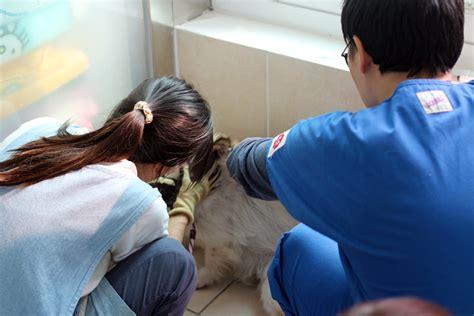 동물자유연대 2015년 10월 19일 센터 아이들 전체 예방 접종을