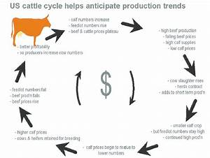Us Cattle Cycle Helps Anticipate Production Trends