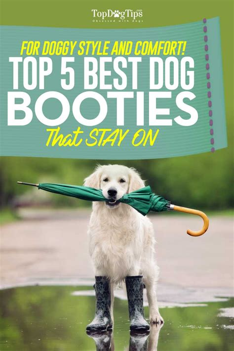 booties for dogs to protect hardwood floors home design