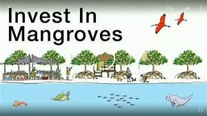 Pentingnya Fungsi Hutan Mangrove