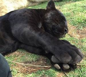 15, Adorable, Pictures, Of, Kitty, Toe, Beans