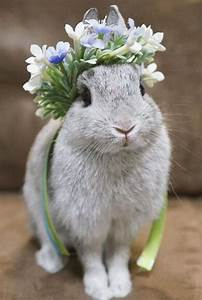 (She) is so beautiful with her floral crown. | 動物 ...