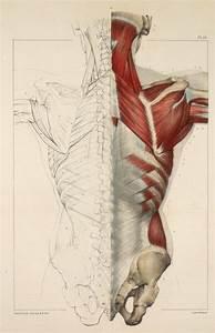 Inspirational Artworks  Anatomy Images