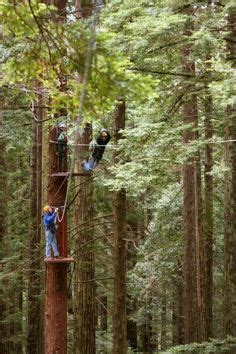 redwood canopy tours 1000 images about zip line on canopies