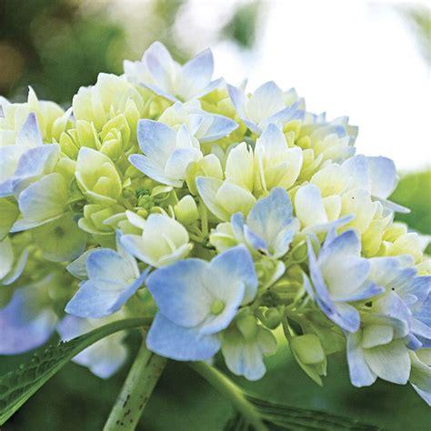7 Gorgeous Shade Loving Plants  The Garden Glove