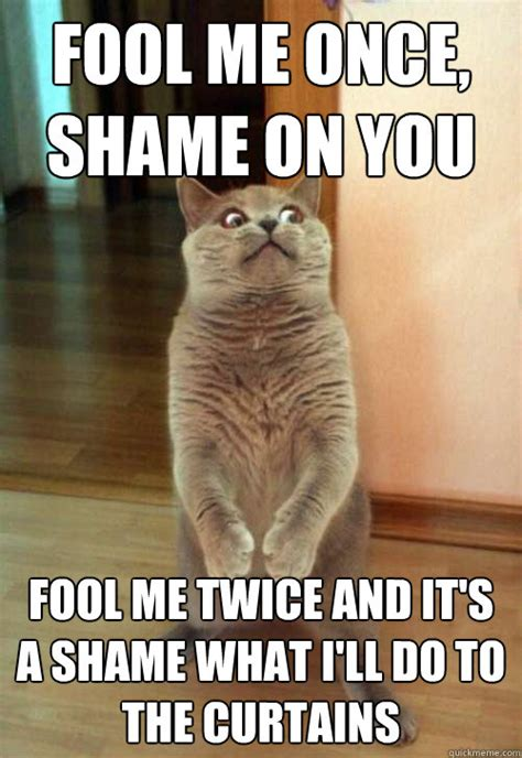 Shame On You Meme - fool me once shame on you cat meme cat planet cat planet