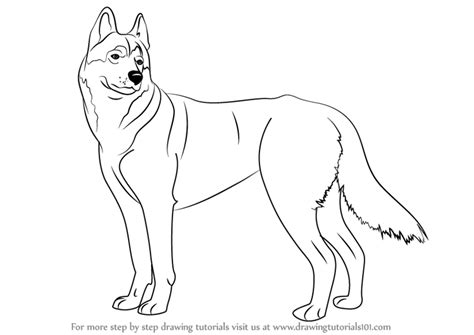 learn   draw  husky dogs step  step drawing