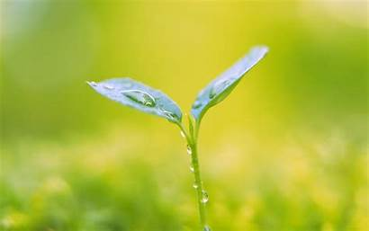 Plant Wallpapers Plants Background Desktop Cool Earth