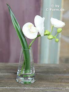 Orchideen Im Glas : k nstliches orchideen orchidee im glas ~ A.2002-acura-tl-radio.info Haus und Dekorationen