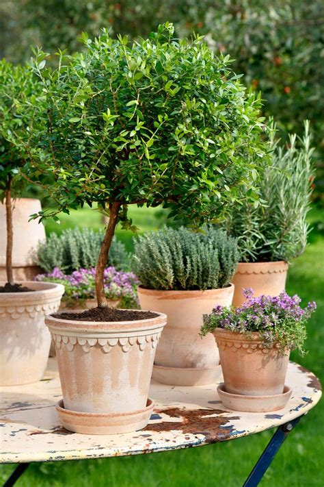 potted trees for patio a planting in one large container is much more 4373
