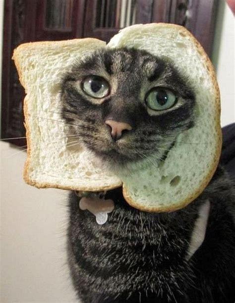 mascotas  pan en la cabeza todo mascotas