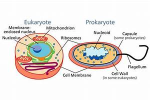 Learn About The Different Types Of Cells  Prokaryotic And