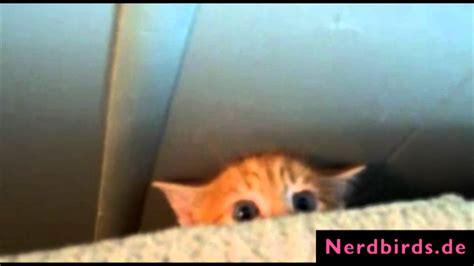 suesse baby katzen die top youtube