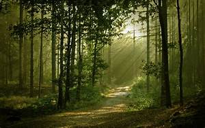 Landscapes, Forest, Path, Sunlight, Filtered, Beam, Ray, Wallpaper