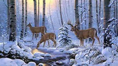 Forest Deer Winter Wallpapers Wallpaperboat Kb