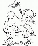 Sheep Coloring Pages Baby Cute Printable sketch template