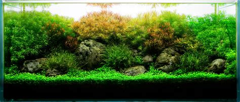 When Does A Planted Tank Become An