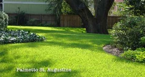 St. Augustine Grass Lawn Maintenance Schedule