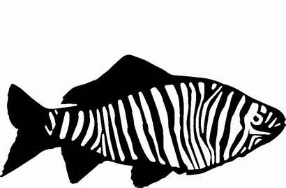Zebra Fish Clipart Animation Wet Monkeys Animated