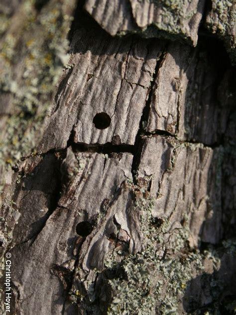 borkenkaefer regierungspraesidium giessen