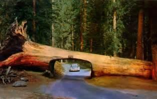 tunnel log in sequoia national park california mapio net