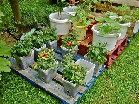 September 2013 Container Gardening