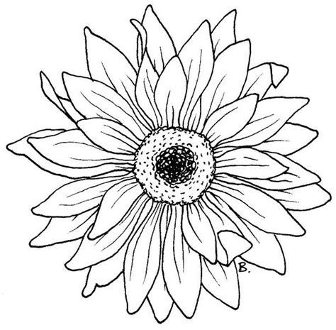 beccys place sunflower gerbera