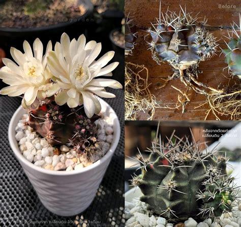 cactus soil - Mini3Garden