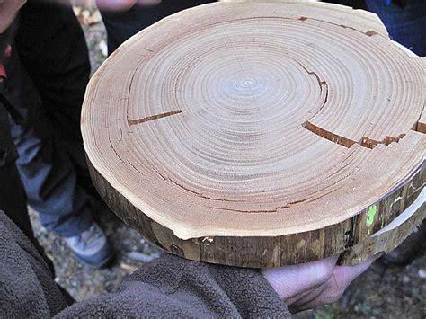 Le Mit Holz by Die Edelkastanie Baum Des Jahres 2018 Waldwissen Net