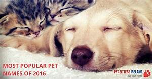 most popular pet names of 2016 for cats and dogs With top dog sitters