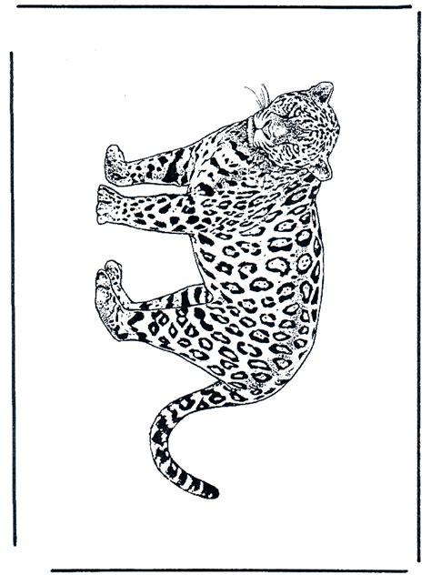 leopardo  felinos