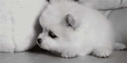 Dog Gifs Giphy