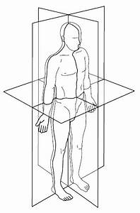 11 Anatomical Position  With Three Reference Planes And