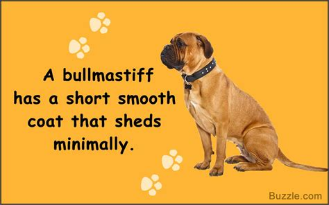 Which Dogs Dont Shed A Lot by Guard Dogs That Don T Shed How Many Do You