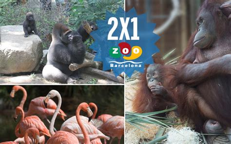 Entradas para Zoo de Barcelona 10% dto (Barcelona) - Atrapalo.com