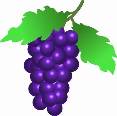Grapes Clip Grape Clipart Vine Onlinelabels Fruit