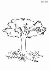 Tree Shrubbery Baum Vorlage Malen Trunk Coloring Thin Thick sketch template