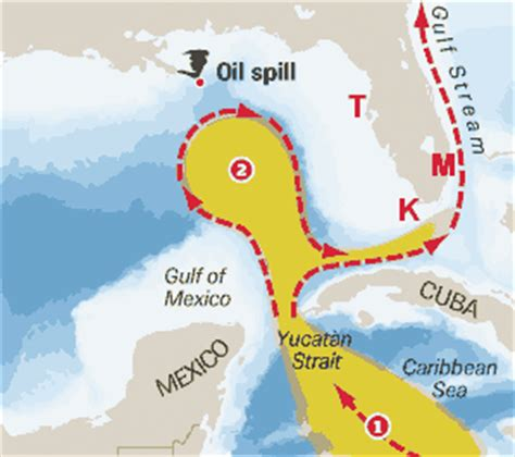 loop current gulf  mexico florida loop current