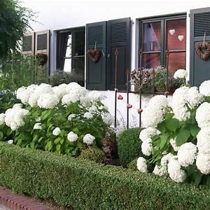 Pflanzen Für Nordseite : vorgarten gestaltungsideen pflanzen und tipps mein sch ner garten ~ Frokenaadalensverden.com Haus und Dekorationen