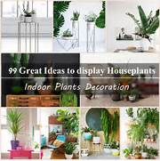 Indoor House Decorating Ideas Indoor Plants Decoration Makes Your Living Space More Comfortable