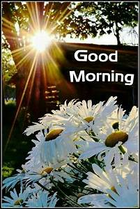 69 Best Images About Sunny Morning Wishes On Pinterest