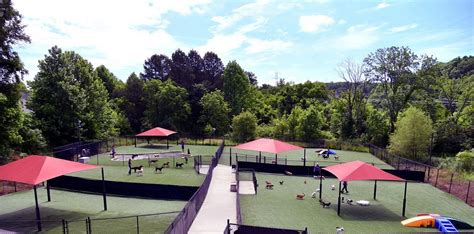 and safe daycare in mooresville nc pampered pets inn 395 | outdoor play