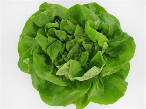 vente à domicile cuisine salade laitue origine sulniac 56 légumes proxilivre