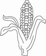Corn Coloring Pages Indian Template Husk Print Button Using Vegetables Grab Could Well Easy sketch template