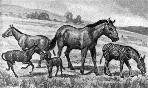 extinct horses commons wikimedia wikipedia wiki history