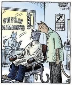 Meme Beauty Shop - 1000 images about hair beauty memes on pinterest salons humour and memes