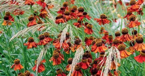 stauden die im winter blühen langlebige stauden f 252 r sonnige standorte mein sch 246 ner garten