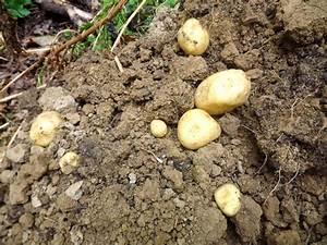 Période Pour Planter Les Pommes De Terre : quand et comment planter les pommes de terre tous au ~ Melissatoandfro.com Idées de Décoration