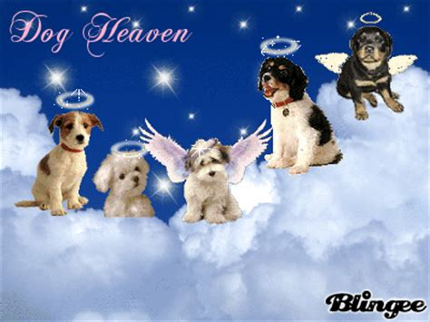 angels  heaven dog quotes quotesgram