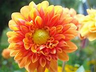 Summer Colors Flowers